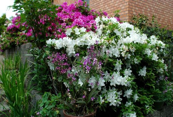 花のある風景_b0093754_1101235.jpg
