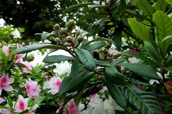 花のある風景_b0093754_1102328.jpg