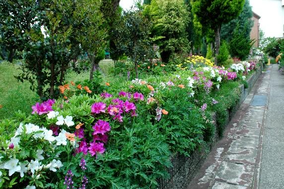 花のある風景_b0093754_110462.jpg