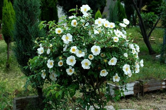 花のある風景_b0093754_191354.jpg