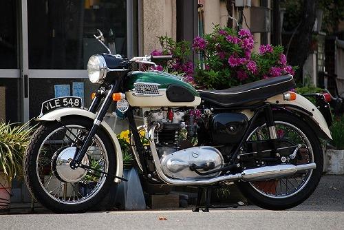 Triumph T110 (ワンテン)_f0164058_1601311.jpg