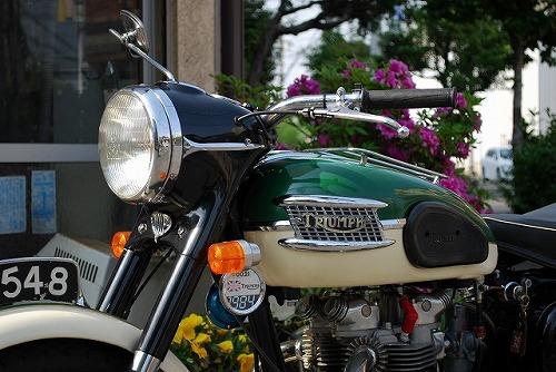 Triumph T110 (ワンテン)_f0164058_1603847.jpg