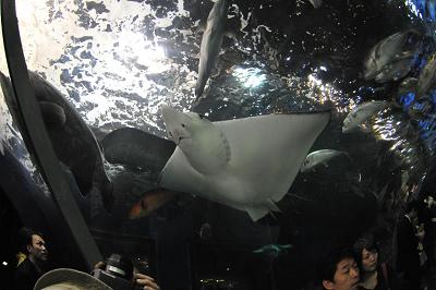 しながわ水族館 2008-04-29_c0135079_22201324.jpg