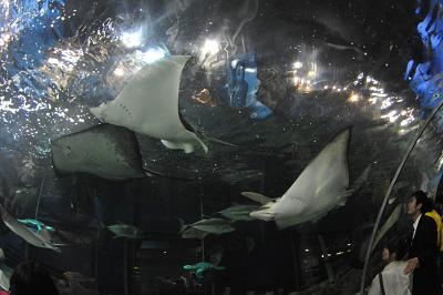 しながわ水族館 2008-04-29_c0135079_22201965.jpg