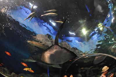 しながわ水族館 2008-04-29_c0135079_22203037.jpg