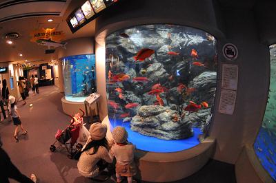 しながわ水族館 2008-04-29_c0135079_2220327.jpg