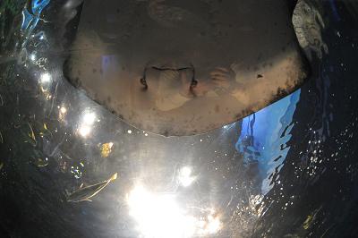 しながわ水族館 2008-04-29_c0135079_2220373.jpg
