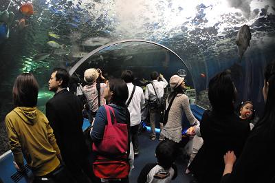 しながわ水族館 2008-04-29_c0135079_2220761.jpg