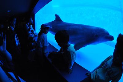 しながわ水族館 2008-04-29_c0135079_22211264.jpg