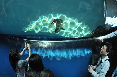 しながわ水族館 2008-04-29_c0135079_22213946.jpg