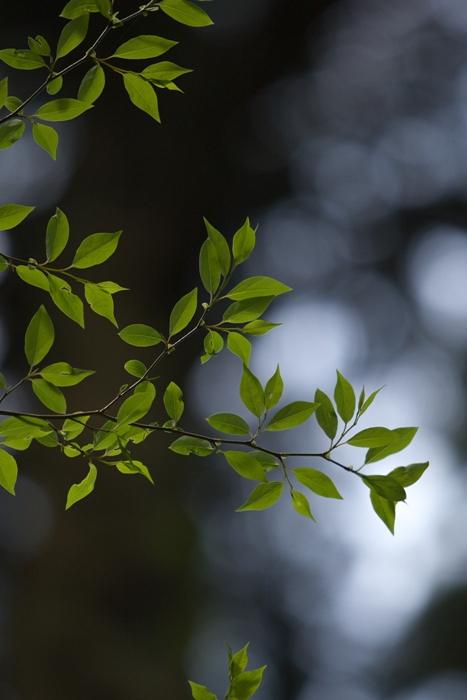 日立 御岩神社の新緑_e0143883_1952234.jpg