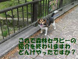 d0104209_23213352.jpg