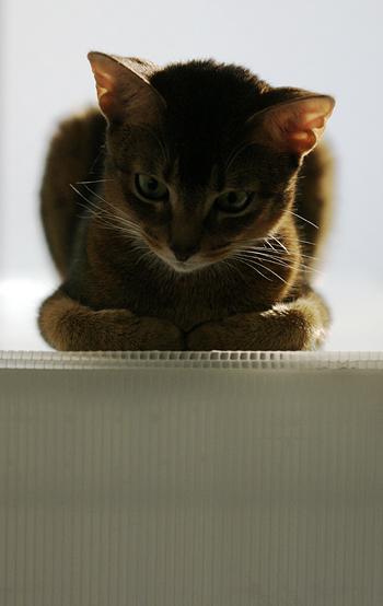 [猫的]写真は光_e0090124_893052.jpg