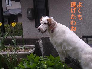 b0113725_2011936.jpg