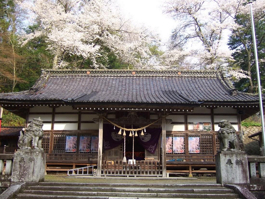 鍋倉山は、やはり桜の名所デアル_d0001843_23331457.jpg