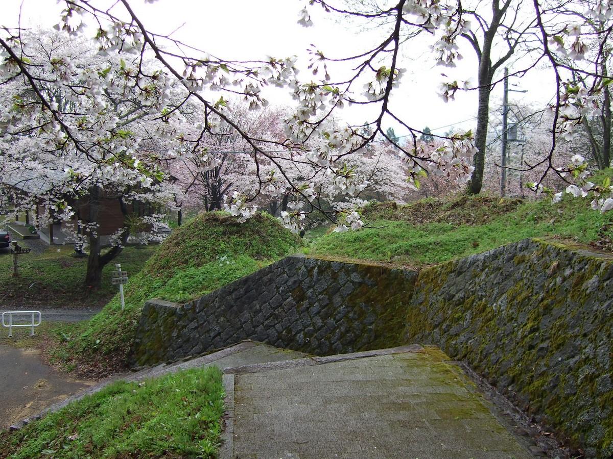 鍋倉山は、やはり桜の名所デアル_d0001843_2337420.jpg