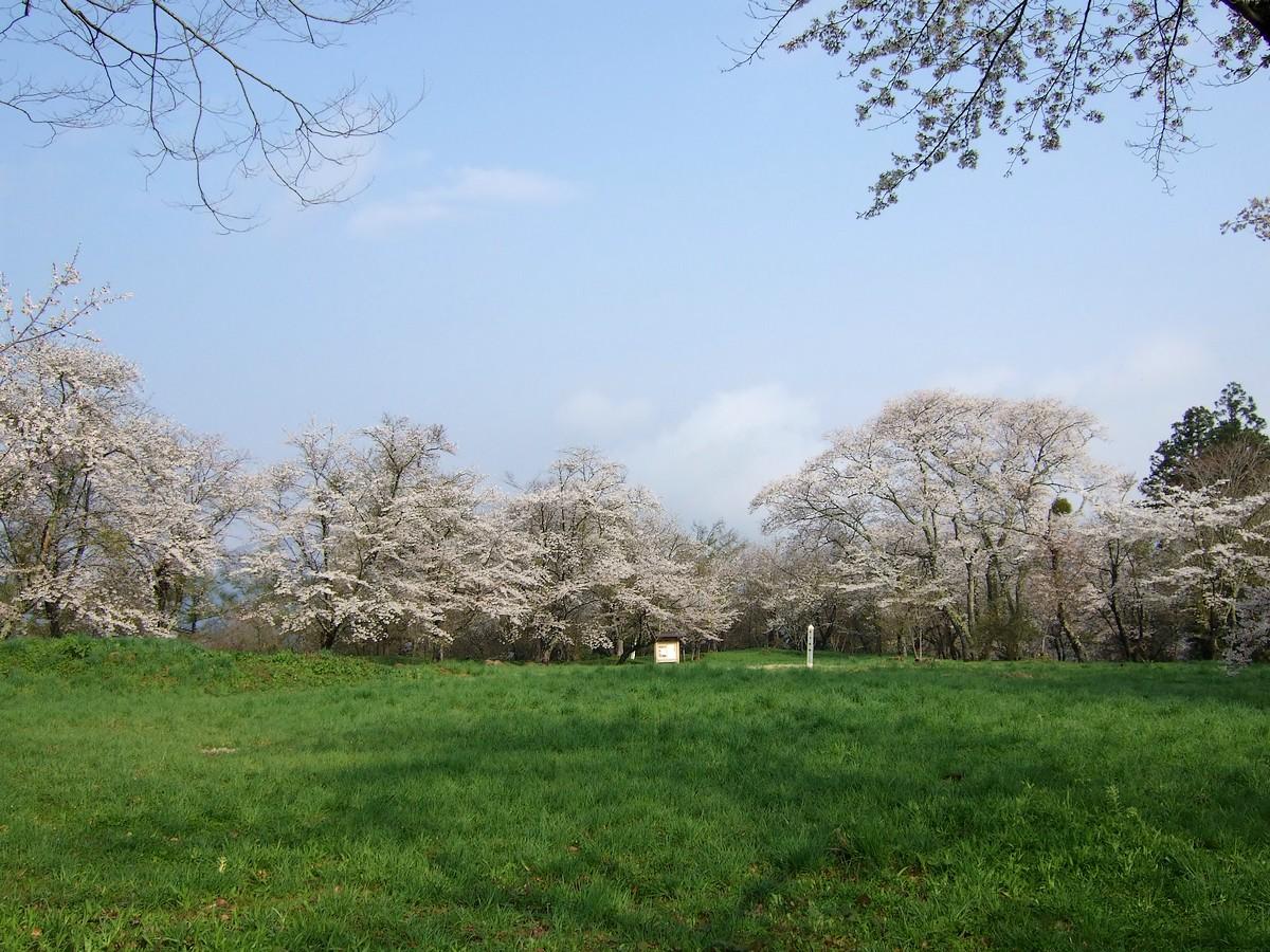 鍋倉山は、やはり桜の名所デアル_d0001843_23414158.jpg