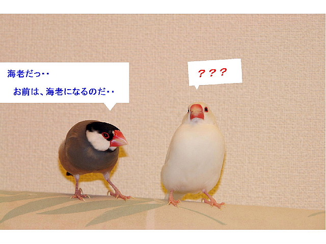 a0019545_18162775.jpg