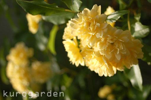 黄色のカーテン(予定)_e0119151_18441369.jpg