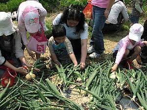 親子ふれあい 農業体験教室_c0141652_1733469.jpg