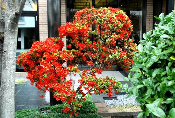 花のある風景_b0093754_021040.jpg