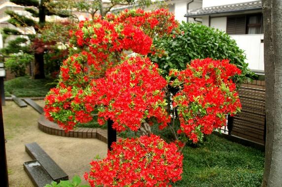 花のある風景_b0093754_07416.jpg