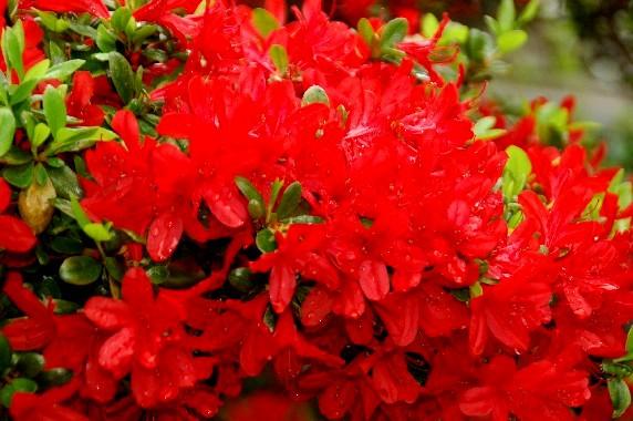 花のある風景_b0093754_074756.jpg
