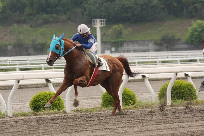 2008年4月26日(土) 高知競馬 6R その1_a0077663_1843592.jpg