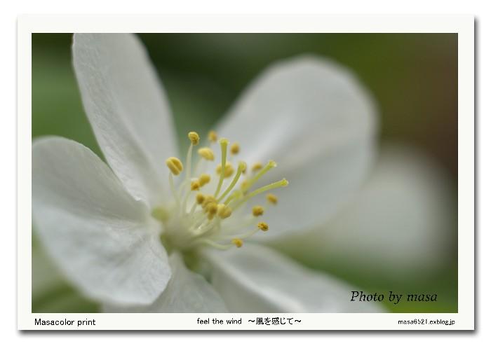 f0063363_1832778.jpg