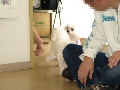 カリの弟、可愛い〜れお君(*^^*)_b0001465_17175740.jpg