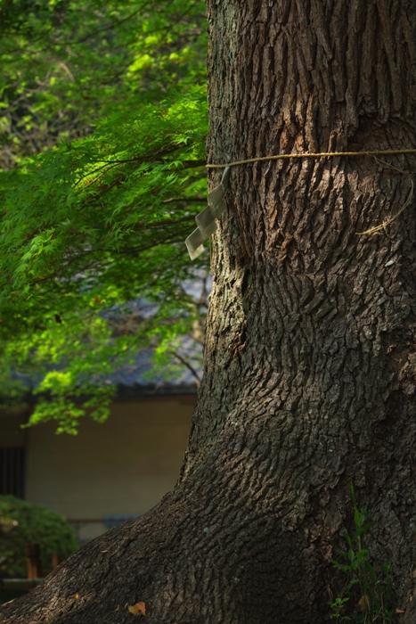 常盤神社と偕楽園のスナップ 2008年4月29日_e0143883_17223430.jpg