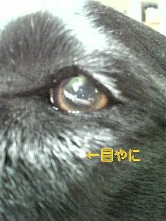 ダニーズ_f0148927_1975388.jpg