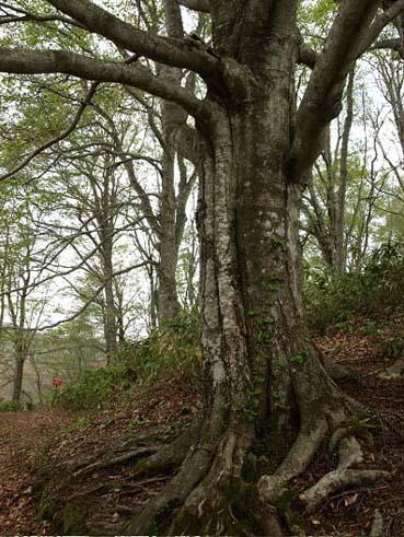 森を歩く_a0094336_11281865.jpg