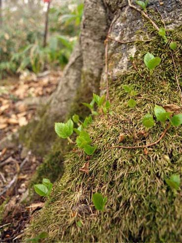 森を歩く_a0094336_1129198.jpg