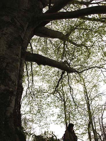 森を歩く_a0094336_11302274.jpg