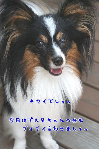 d0013149_9105717.jpg