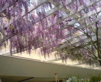 お花とグルメの旅・お花編_d0149774_1035999.jpg