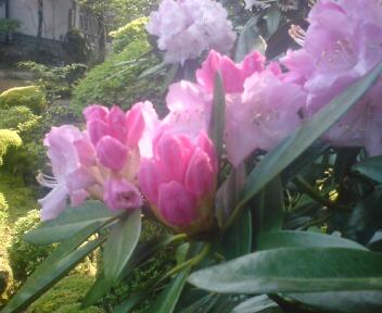 お花とグルメの旅・お花編_d0149774_11165671.jpg