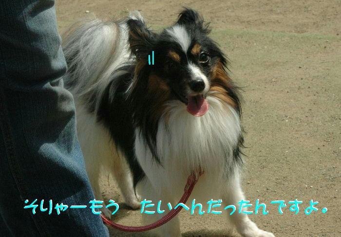 c0075585_7583638.jpg