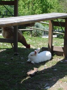ウサギのその後_f0106597_1924109.jpg