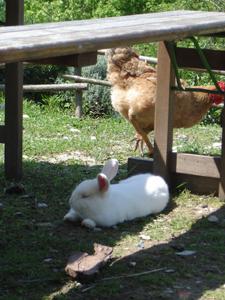 ウサギのその後_f0106597_19253999.jpg