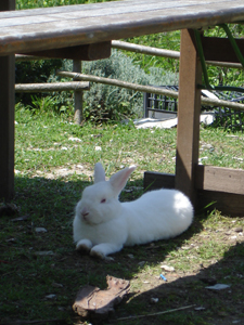 ウサギのその後_f0106597_19264137.jpg