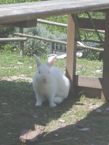 ウサギのその後_f0106597_19281259.jpg
