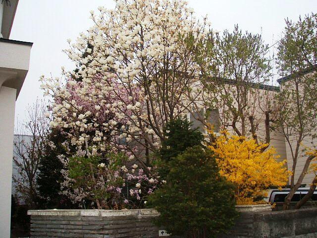 北海道の春、一気に咲く_f0054720_012554.jpg