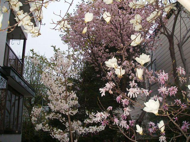 北海道の春、一気に咲く_f0054720_0214861.jpg