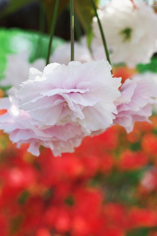 春の光_f0155048_19464032.jpg