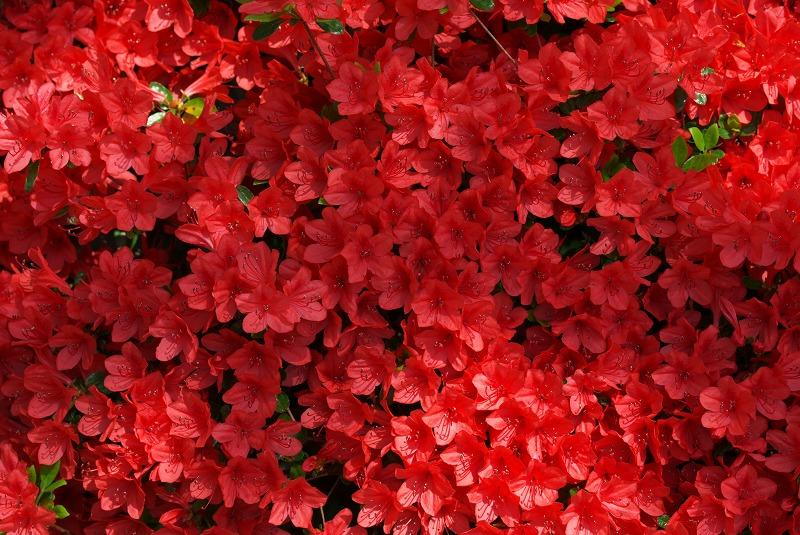 春の光_f0155048_19464720.jpg