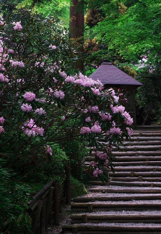 咲きみだれる、春_f0155048_220512.jpg