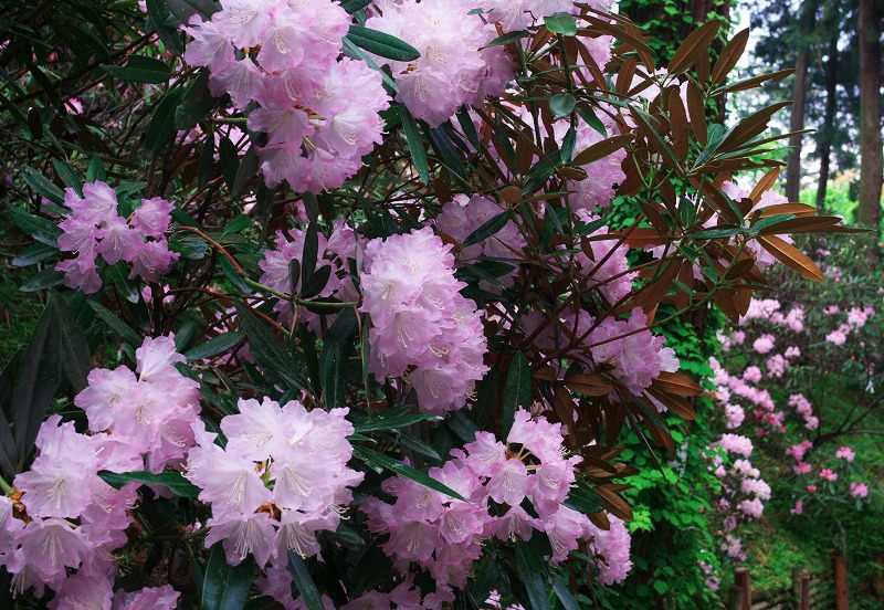 咲きみだれる、春_f0155048_221868.jpg