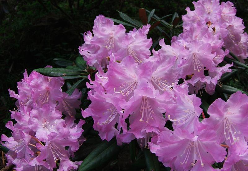 咲きみだれる、春_f0155048_2225561.jpg